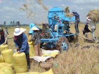 Giá lúa tăng 200 đồng - 450 đồng/kg