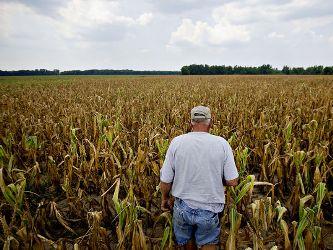 Giá nông sản leo thang do hạn hán tại Mỹ