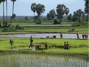 Trung Quốc đầu tư mạnh cho nông nghiệp Campuchia