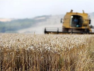 Đặt cược vào nông sản lên giá 13 tuần liên tiếp