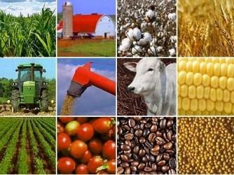 Thị trường hàng hóa thế giới tuần từ 16-21/7/2012