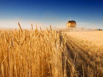 Nguồn cung xuất khẩu lúa mỳ tại Nga bị đe dọa do thời tiết xấu