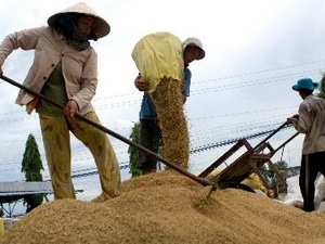Kiên Giang mua tạm trữ 32.000 tấn lúa hè thu