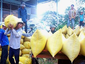Hậu Giang đăng ký lập kho tạm trữ lúa gạo trên 600.000 tấn