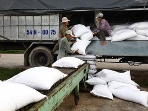 Kiến nghị những giải pháp mới về tạm trữ lúa gạo