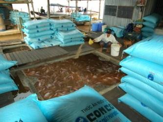 ĐBSCL mở rộng sản xuất giống thủy sản quy mô lớn