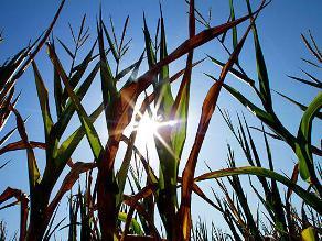 Mỹ vừa trải qua tháng nóng kỷ lục 118 năm