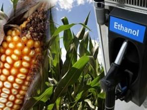Liên Hợp Quốc kêu gọi Mỹ giảm sản xuất ethanol ngăn khủng hoảng lương thực