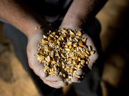 G20 lên kế hoạch đối phó với giá lương thực tăng cao