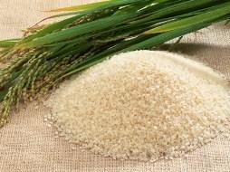 Giá gạo tăng tạo sức ép lạm phát ở châu Á