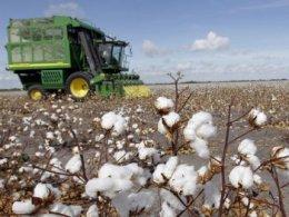 Trung Quốc sẽ không tăng nhập khẩu bông năm nay