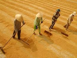 NHNN yêu cầu đề xuất giải pháp hỗ trợ, mở rộng tín dụng nông nghiệp, nông thôn