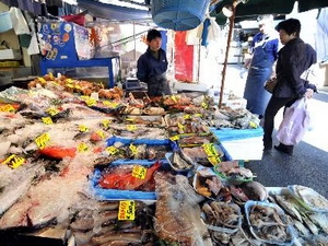 Cá gần nhà máy Fukushima nhiễm xạ cao kỷ lục