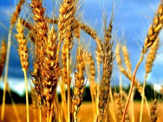 Giá nông sản đồng loạt giảm do hoạt động xuất khẩu bị ngưng trệ