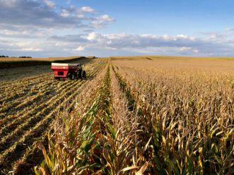 Nông dân Mỹ thu lợi nhuận kỷ lục khi hạn hán