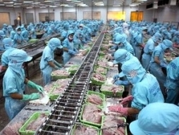 Từ 31/8, Bianfishco bắt đầu trả nợ cho nông dân