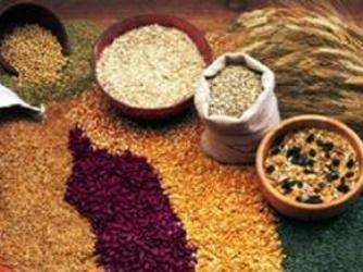 Oxfarm: Giá lương thực thiết yếu có thể tăng gấp đôi