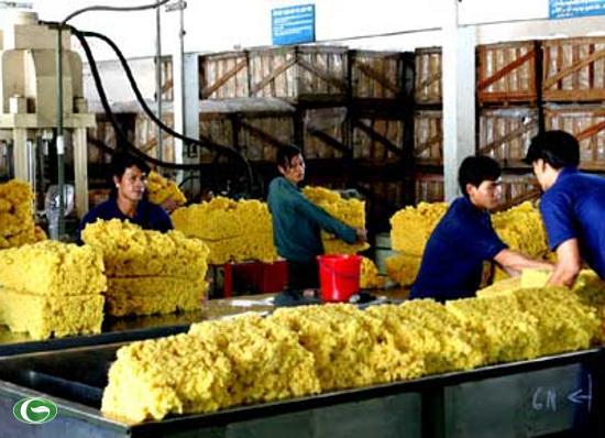 Tập đoàn Công nghiệp cao su đạt doanh thu hơn 16.000 tỷ đồng