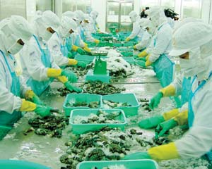 Xuất khẩu thủy sản sang Mỹ, ASEAN tăng hơn 30% trong 9 tháng đầu năm
