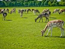 Xây công viên động vật hoang dã Quốc gia gần 1.500ha tại Ninh Bình