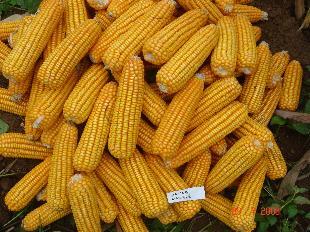 Việt Nam nhập hơn 9 triệu tấn nguyên liệu thức ăn chăn nuôi mỗi năm