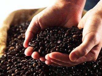 Tổng hợp thị trường cà phê tuần từ ngày 1-6/10/2012