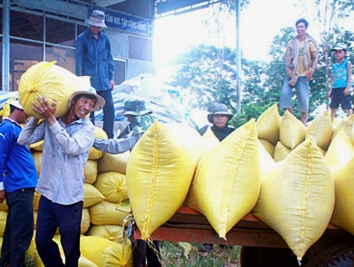Sẽ chỉ có 100 đầu mối xuất khẩu gạo