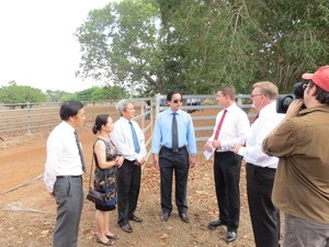 Việt Nam là thị trường nhập gia súc tiềm năng của Australia