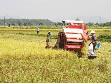Dư nợ cho vay nông nghiệp tại Quảng Ngãi tăng 8%