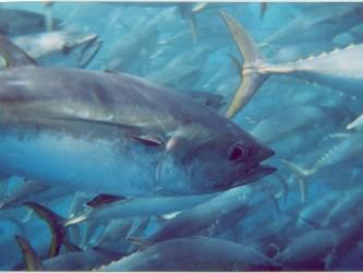 Brazil đẩy mạnh phát triển nghề nuôi trồng thủy sản