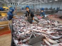 80% doanh nghiệp thủy sản có nguy cơ phá sản