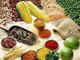 Ngành nông nghiệp xuất siêu gần 10 tỷ USD sau 11 tháng