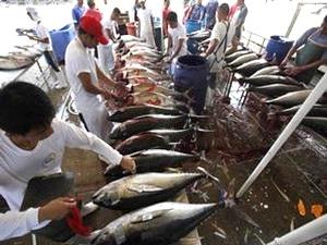 Indonesia muốn dẫn đầu thế giới lĩnh vực chế biến cá