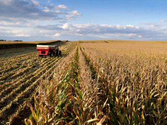 FAO kêu gọi tăng mạnh đầu tư cho nông nghiệp