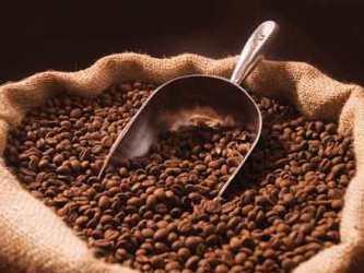 Giá cà phê trong nước giảm 400 nghìn đồng/tấn
