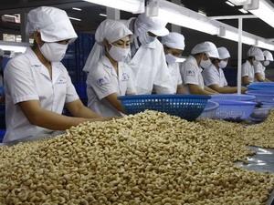 Kim ngạch xuất khẩu điều ước đạt kỷ lục năm 2012