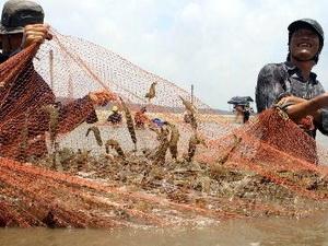 Sản lượng tôm nuôi năm 2012 giảm gần 4% do dịch bệnh