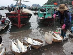 Sản lượng đánh bắt hải sản tại Quảng Nam vượt xa kế hoạch năm