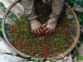 Giá cà phê trong nước phục hồi lại mốc 39 triệu đồng/tấn