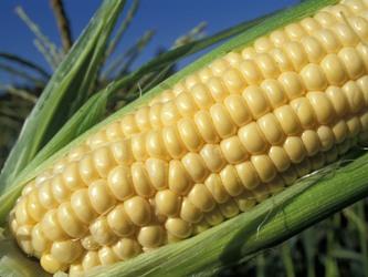 Giá nông sản Mỹ có tuần giảm mạnh