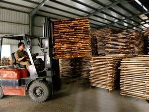 Đắk Lắk đình chỉ nhiều cơ sở chế biến gỗ vi phạm