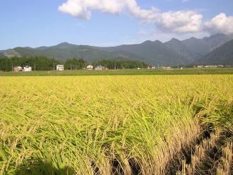 Trung Quốc 9 năm liền bội thu nông nghiệp