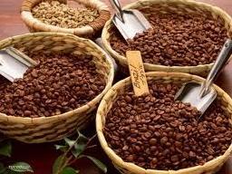 Giá cà phê giảm 300 nghìn đồng/tấn