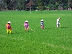 Nhật Bản giúp quy hoạch bền vững nông nghiệp ĐBSCL