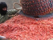 Nhà nhập khẩu Mỹ phản bác vụ kiện chống trợ cấp ngành tôm