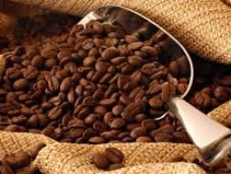 Người trồng cà phê găm hàng trước Tết