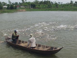 Bến Tre: Dự kiến năm 2013 đạt 140.000 tấn cá tra nguyên liệu