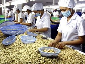 Doanh nghiệp Đồng Nai vay 1.800 tỷ đồng thu mua hạt điều niên vụ 2013