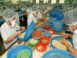 Xuất khẩu điều 2 tháng đầu năm ước giảm 60% về lượng