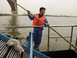 Thượng Hải: 13.000 xác lợn trôi trên sông Hoàng Phố